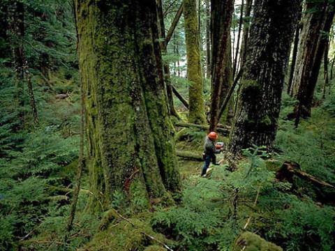 Một cảnh trong 'Tội ác rừng xanh' - phim giành giải cao nhất LHP môi trường toàn quốc lần thứ IV.