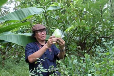 Nhà thơ Cao Xuân Sơn với trái ổi trong vườn nhà của Trang Thế Hy.