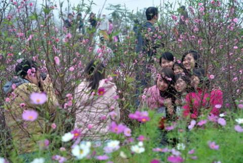 Hình ảnh mùa xuân gắn liền với sắc hồng của hoa đào. Ảnh: Hoàng Hà.