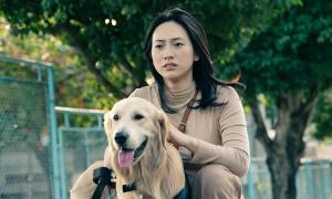 Những chú chó trên màn ảnh Việt